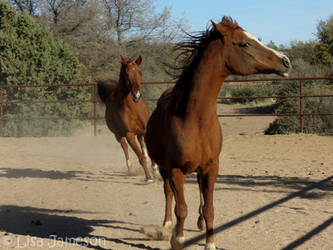 Horses by PepstarsWorld