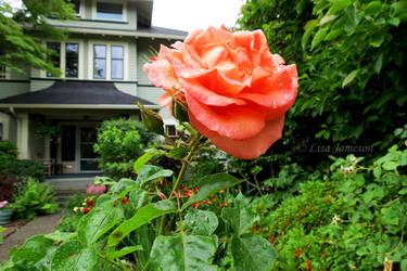 Single Rose by PepstarsWorld