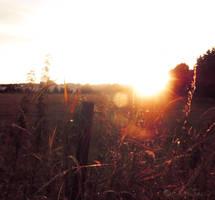 'Autumn Sun'