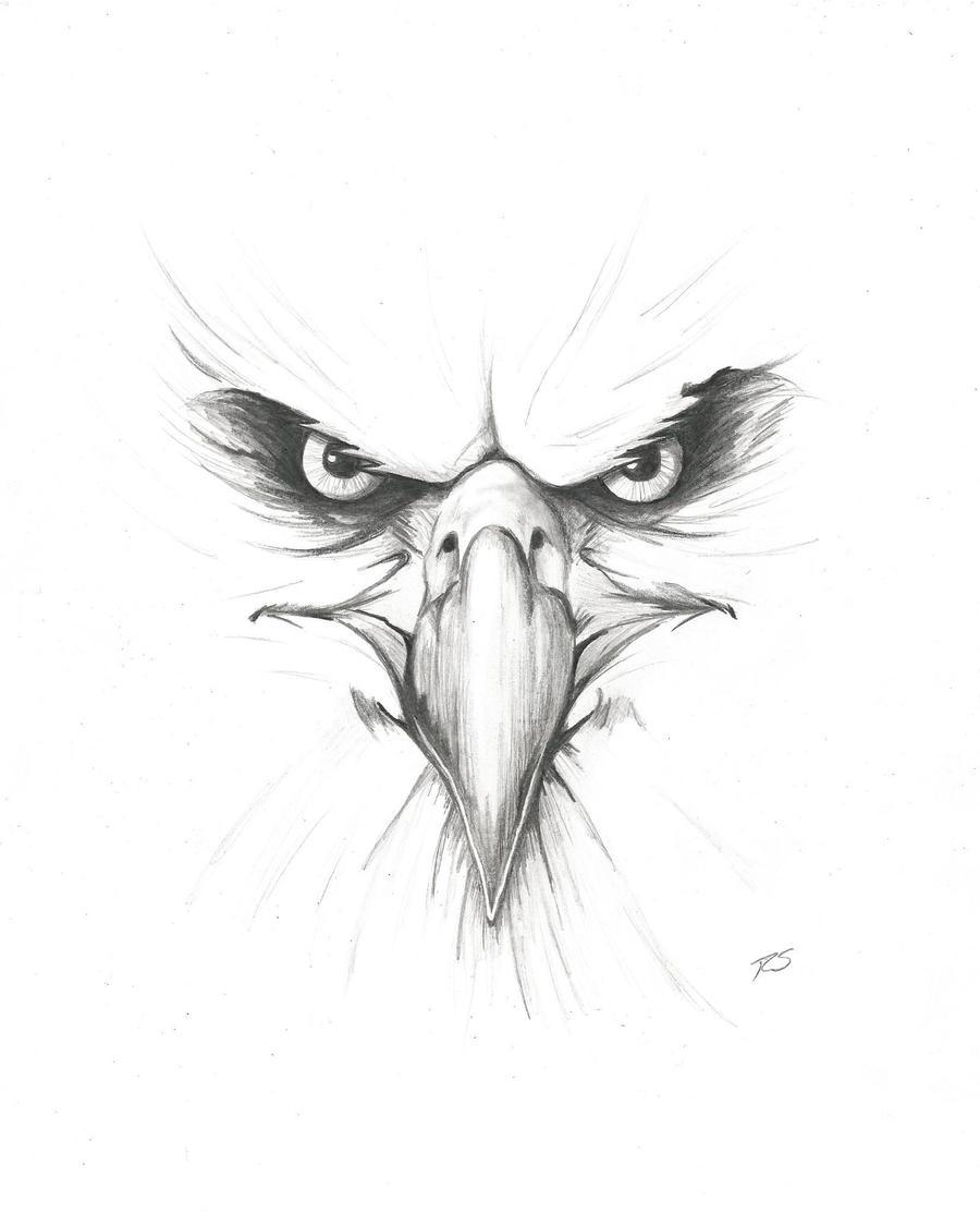 angry animal drawing - photo #8