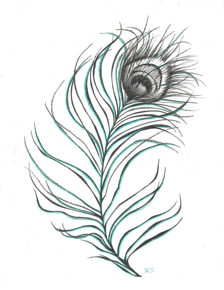 Black And White Peacock Feather Drawing | www.imgkid.com ...
