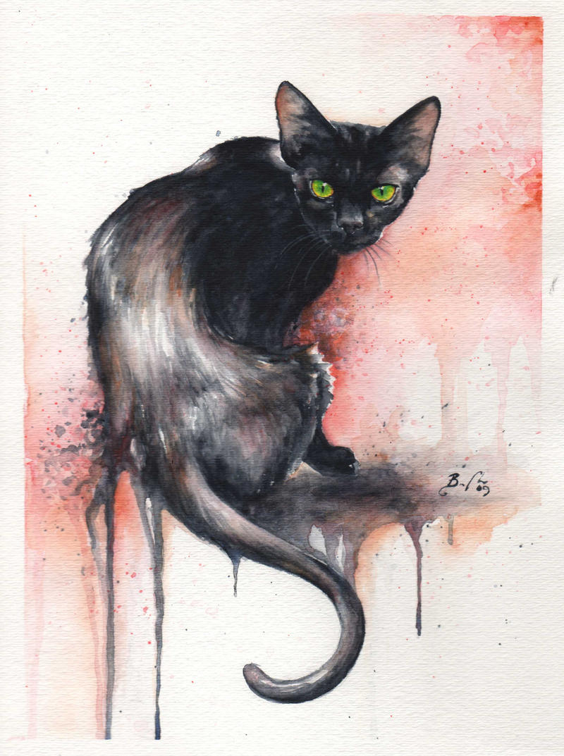 The Black Cat by bcduncan
