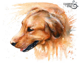 Chester by bcduncan