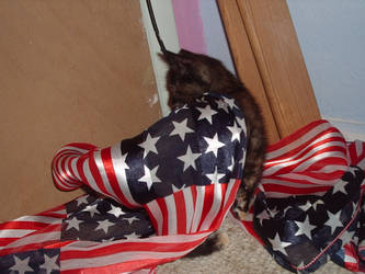 Showing My Patriotism by Poetic-Movement