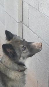 Chibi8A's Profile Picture