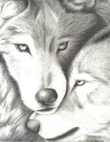 Wolves Nuzzling by EvaJanus