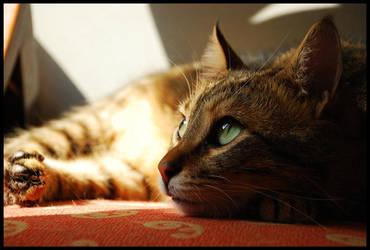 Portrait of a Cat - 9 by Nevsenev