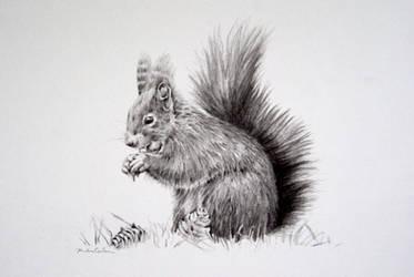 squirrel by czochanska