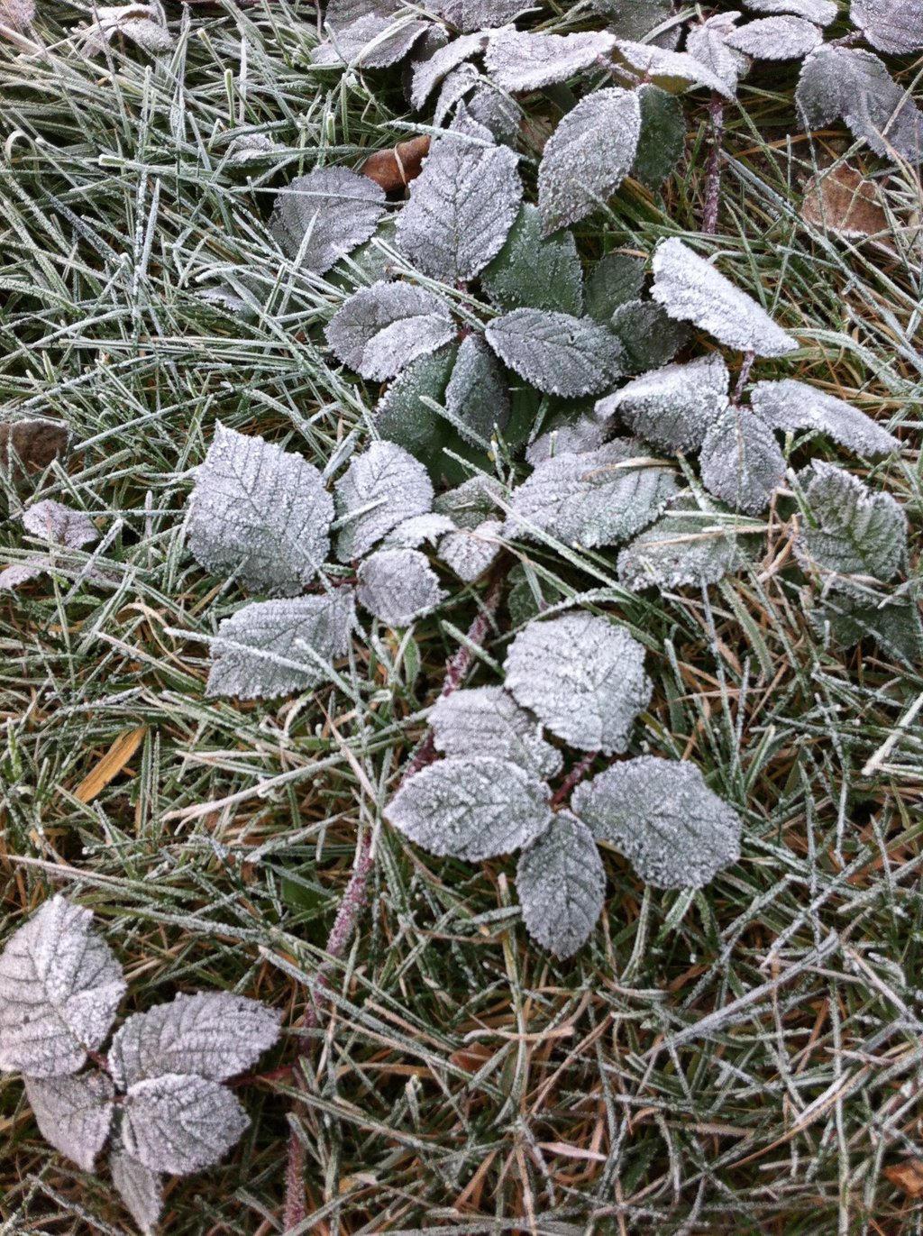 Frosty Leaves 1 by SnowWolfx13