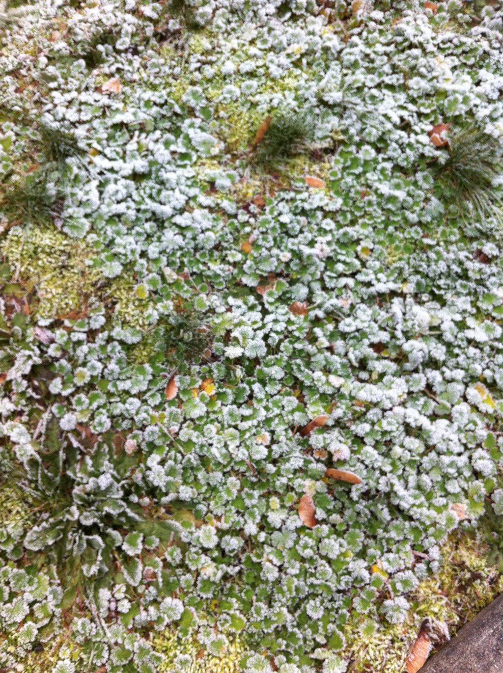 Frosty Leaves 2 by SnowWolfx13
