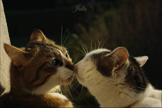 Cats and Kiss