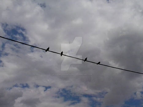 Birds on the string