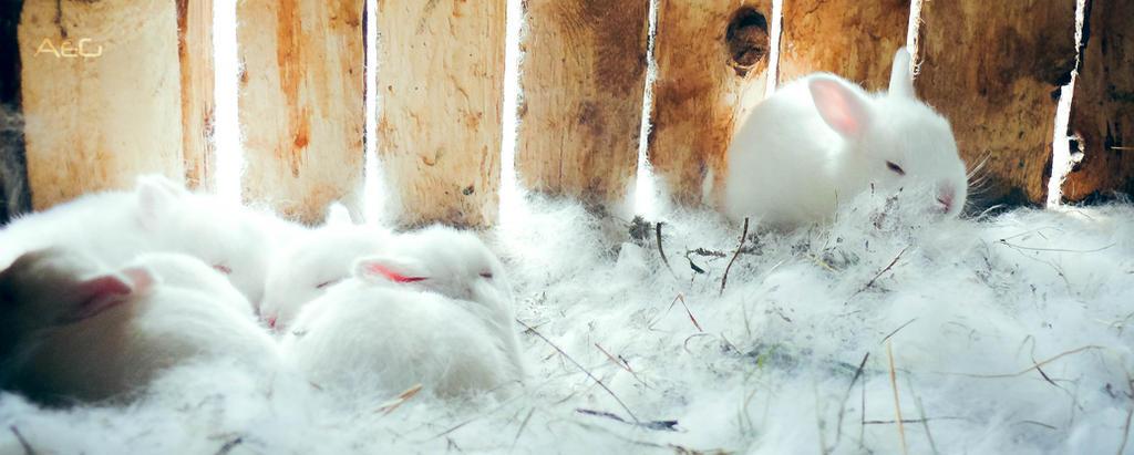 Happy little bunnies by AeG11