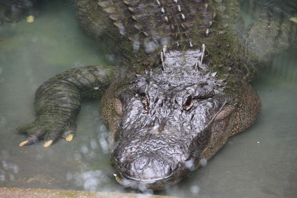 Reptile by craigsarah