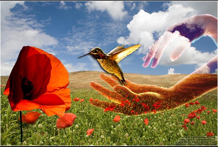 Poppy Fantasy by LyDeea