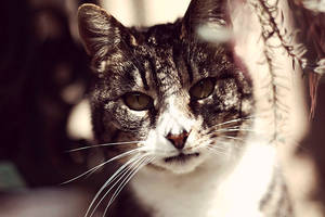 Mandatory cat submission