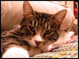 Meowww by nasal