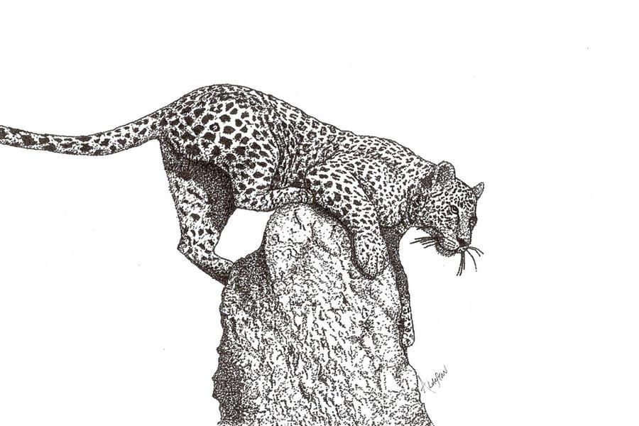 Leopard by Fallenangel5772