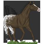 Appaloosa Stallion by Skye-Fate