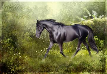 Wild Horses by Skye-Fate