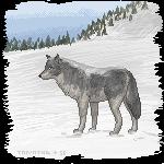 Wolf Winter by Skye-Fate