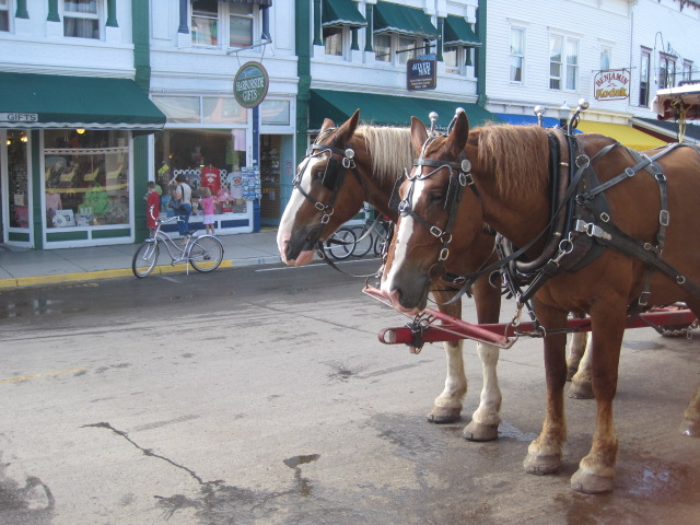 mackinac island cougars personals Dating with a twist speed mondays-sundays, 6:30-11 p need places/areas stay things do.