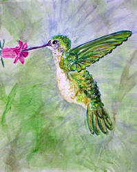 Hummingbird in Blue and Green