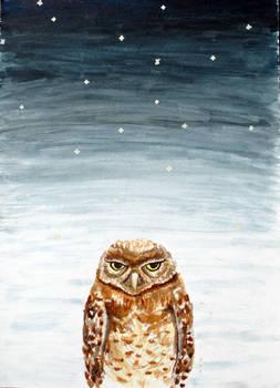 Percy the Grumpy Owl