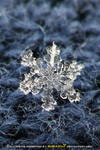 snowflake's memories 2