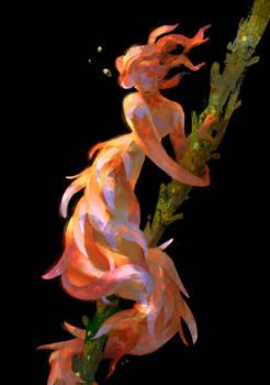 Phyllodesmium Poindimiei Mermaid