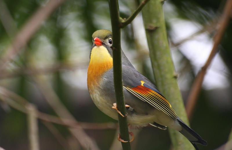 bird by czakalwe