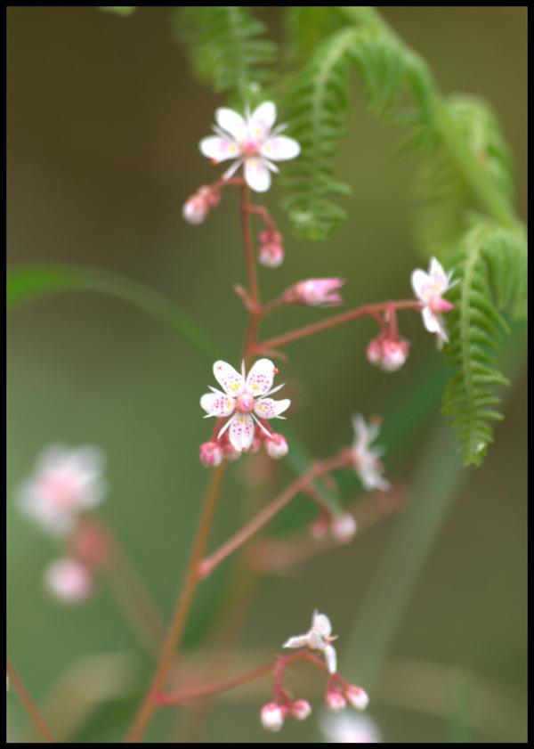 wild flowers by czakalwe