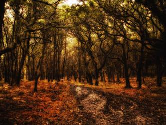 Wood by thudjie