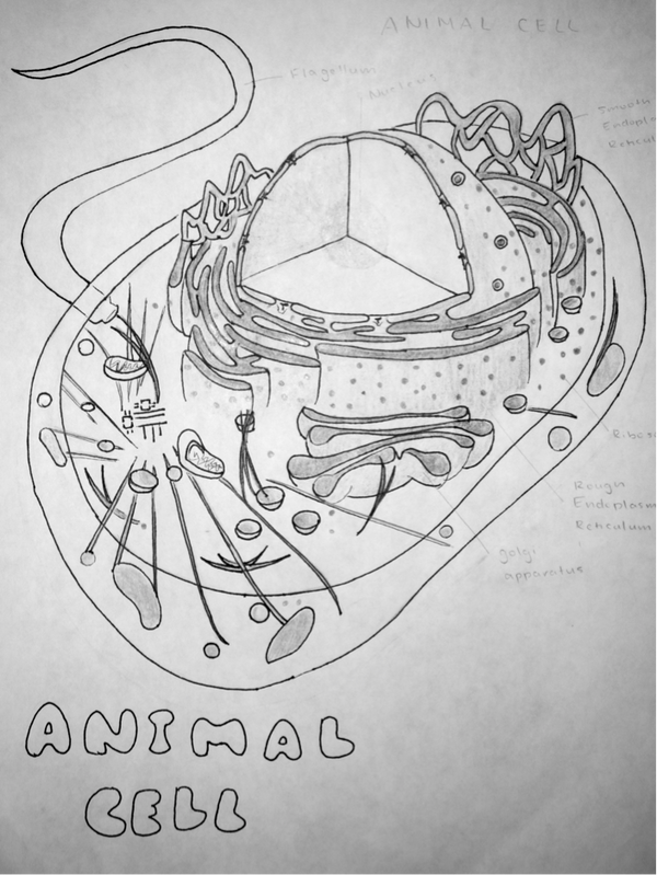 Animal cell by coastmist