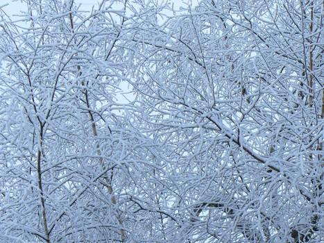 Snow On Trees Texture