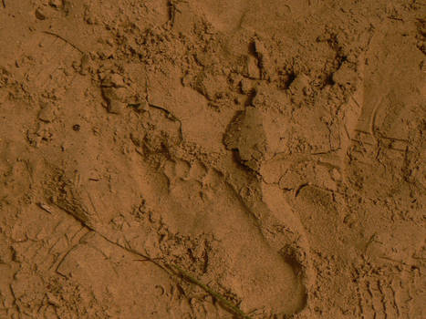 Footprint in sand texture