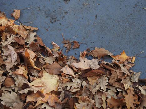 autumn fall or whatever
