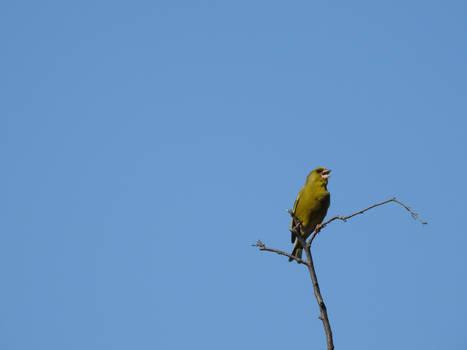 lil birdy doin a song