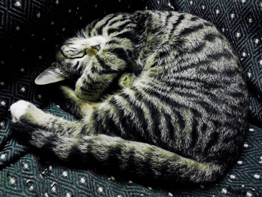 sleep on sofa by Seadre