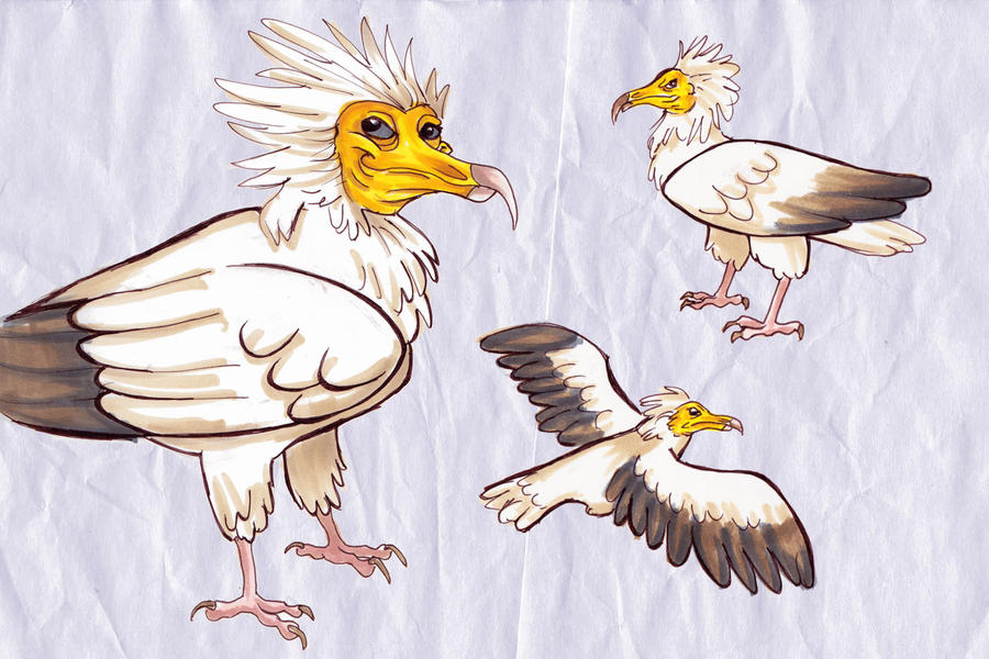 egyptian vulture drawing - photo #7