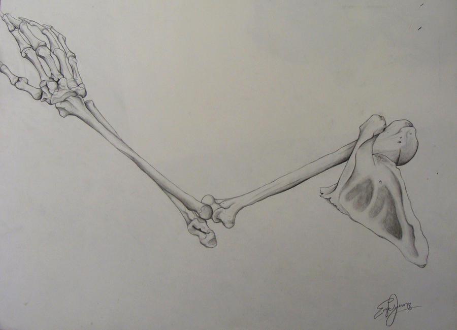 Skeleton Arm By Erynxx On Deviantart
