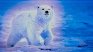 Coloury Polar Bear