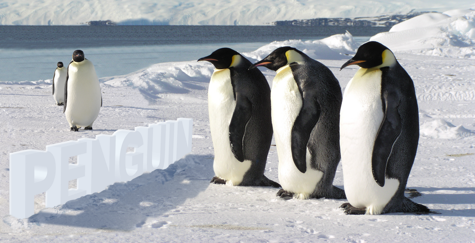 emperor penguin template by wildsway18 emperor penguin template by wildsway18