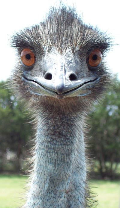 EMU1- stock by Rainny-Stock