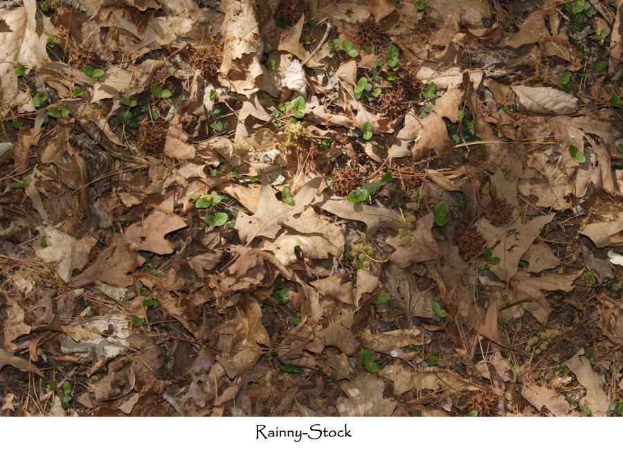 Dusty Floor Texture Forest Floor Texture by