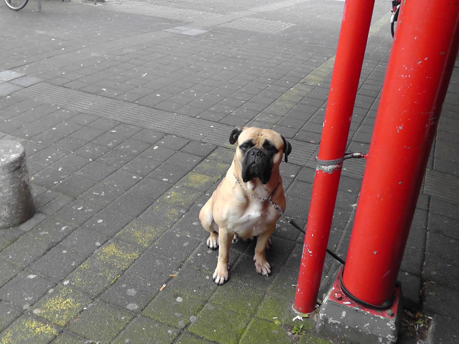 12-11-19 Unknown Dog by Herdervriend