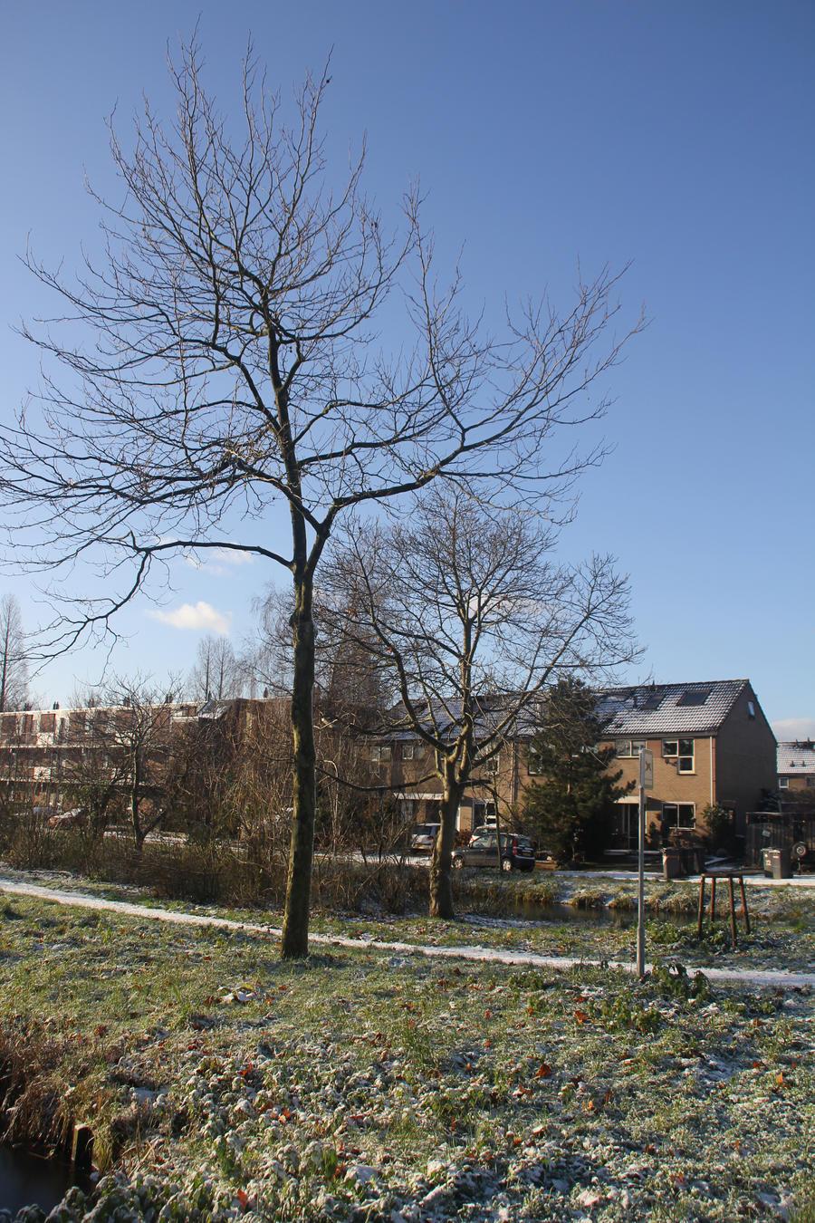 12-12-06 Winter Wonderland 2 by Herdervriend