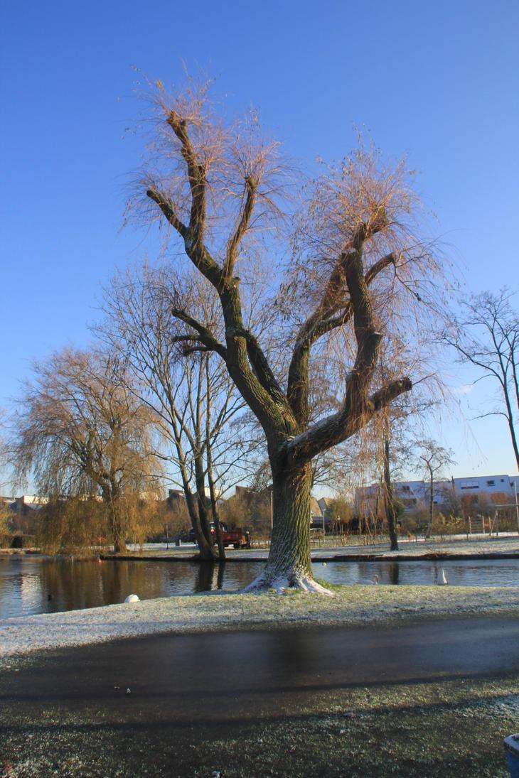 12-12-06 Winter Wonderland 4 by Herdervriend