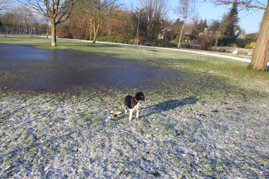 12-12-06 Winter Wonderland 5 by Herdervriend
