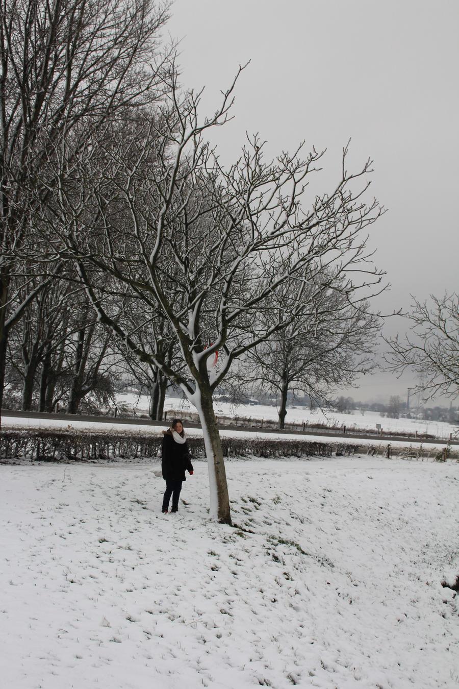 12-12-07 Winter Wonderland 13 by Herdervriend